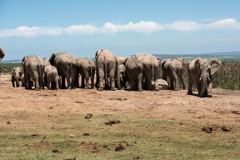 A row of elephants forming a pattern in composition