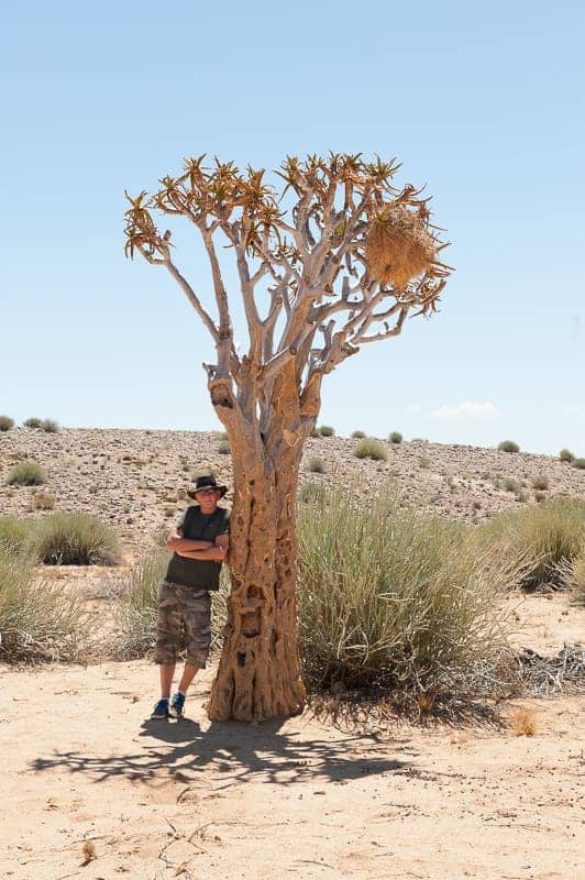 Snapshot of man leaning against quiver tree