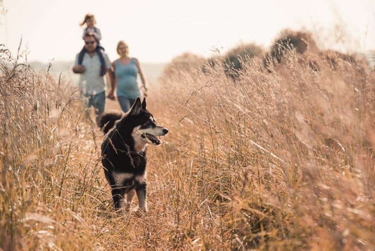 Mirrorless vs DSLR for beginners photographing dogs